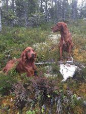 Agneta Andersson, fågelhundkurs, hundkurs, Jonas hunting experience