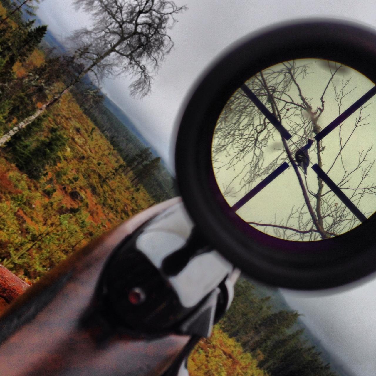Jonas hunting experience, Scandinavian Mountains, Jonas i Sälen, hunt, hunting