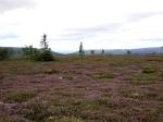 Jakt med guide, Skogsfågel, Jonas Hunting Experience, jakt, Sälenfjällen
