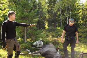 Jonas Hunting Experience, Jonas i Sälen, Östfjällets fäbod, hunting in Sälen, älgjakt, jaga älg