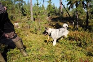 jakt. Sälen, jakt i Sälen, Sälenfjällen, Scandinavian Mountains
