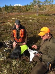 Ripjakt, ripa, gamebird, Jonas Hunting, Scandinavian Mountains