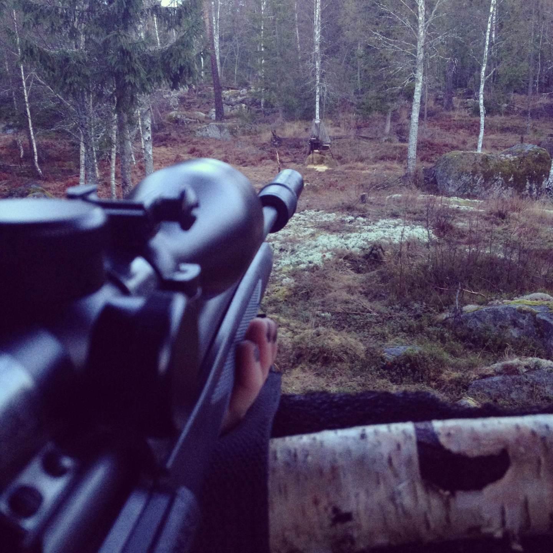 Jaga älg, älgjakt, älg, jakt, jaga i Sälen, Jonas Hunting Experience